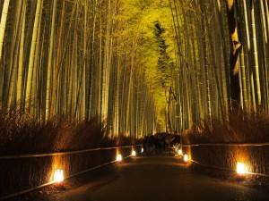 Kyoto Arashiyama Hanatouro 2014