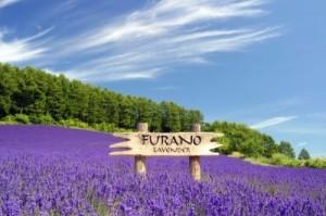 furano-summer